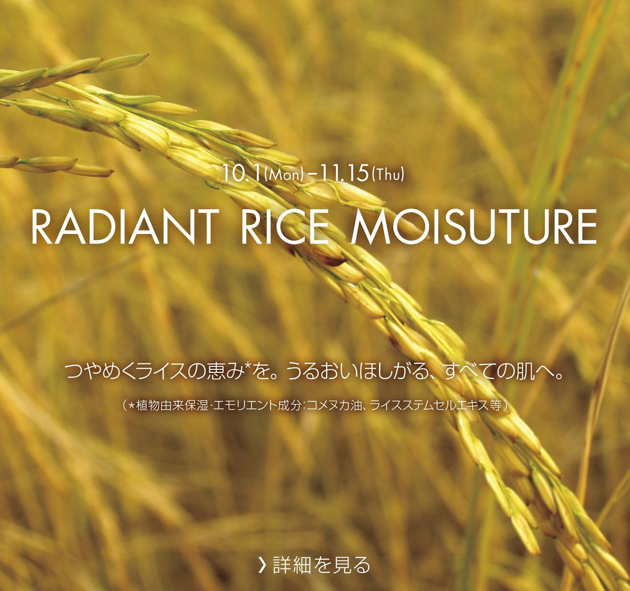 RADIANT RICE MOISUTURE